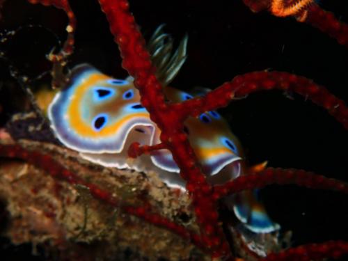 ピピ島でウミウシのパレード(*^_^*)_f0144385_13152349.jpg