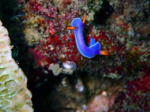 ピピ島でウミウシのパレード(*^_^*)_f0144385_13225083.jpg