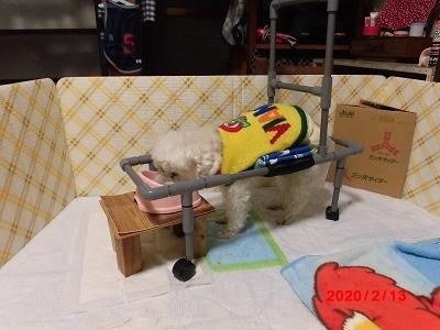 獅子丸の車椅子_b0231886_22040558.jpg
