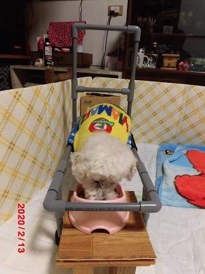 獅子丸の車椅子_b0231886_22041359.jpg