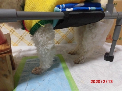 獅子丸の車椅子_b0231886_22050021.jpg