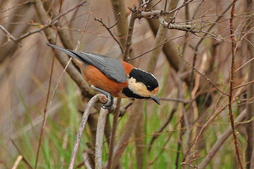 雨の中での鳥撮り_b0024798_15125696.jpg