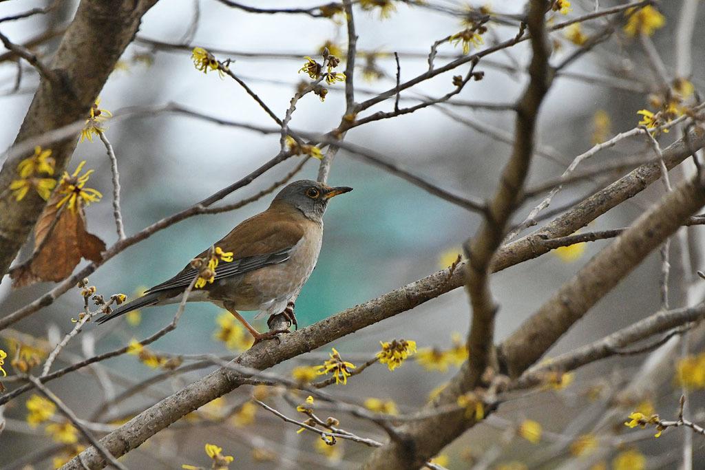雨の中での鳥撮り_b0024798_15133678.jpg