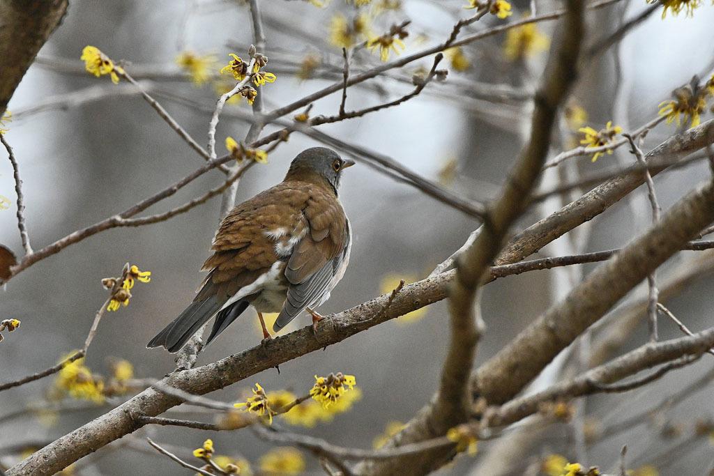 雨の中での鳥撮り_b0024798_15134621.jpg