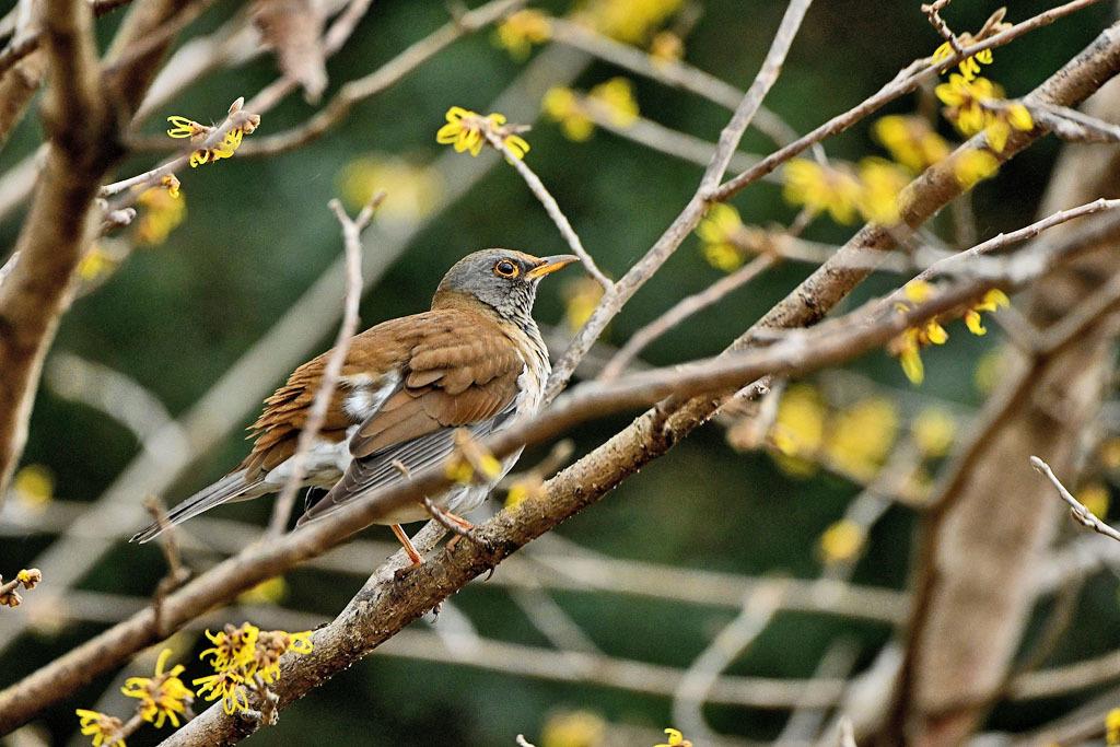 雨の中での鳥撮り_b0024798_15135845.jpg