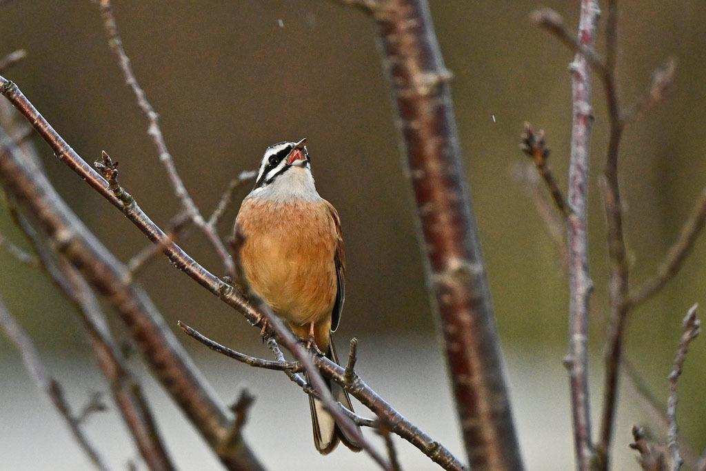 雨の中での鳥撮り_b0024798_15161015.jpg