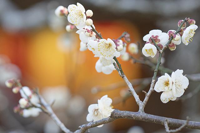 鎌倉・宝戒寺の梅_b0145398_23443104.jpg