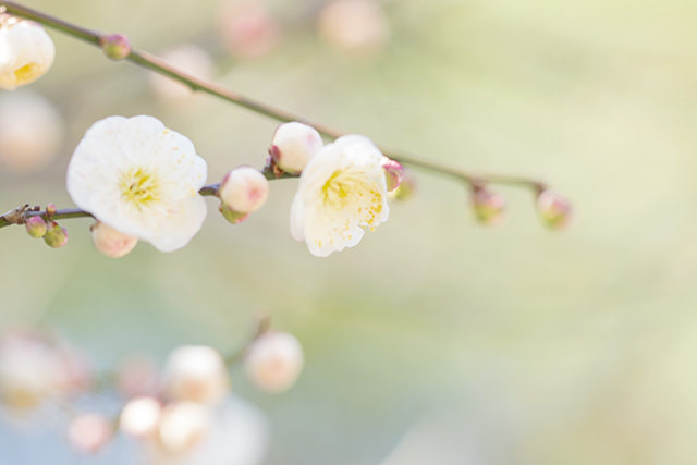 鎌倉・宝戒寺の梅_b0145398_23462286.jpg