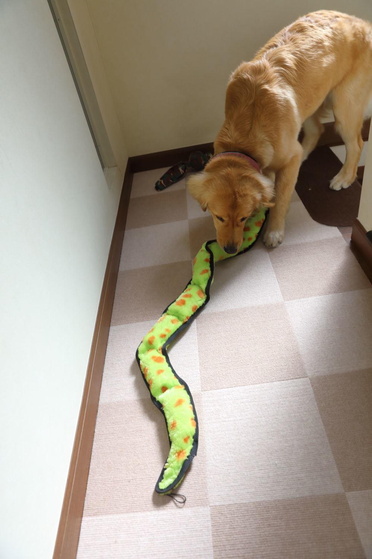 朝から大蛇遊び♪_b0275998_12085829.jpg