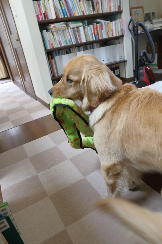 朝から大蛇遊び♪_b0275998_12090161.jpg