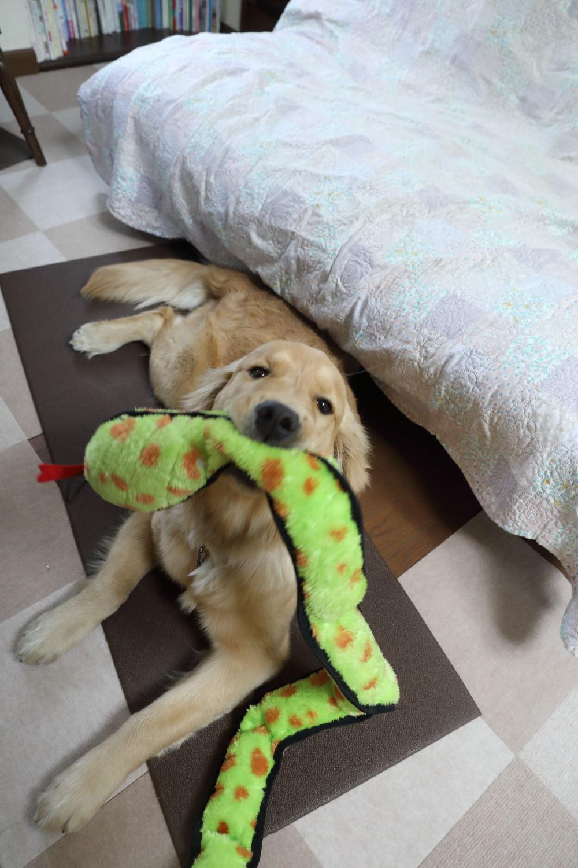 朝から大蛇遊び♪_b0275998_12092249.jpg