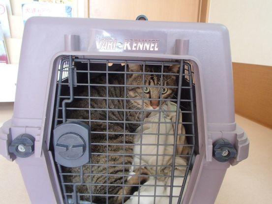 動物病院へ_f0064906_17484378.jpg