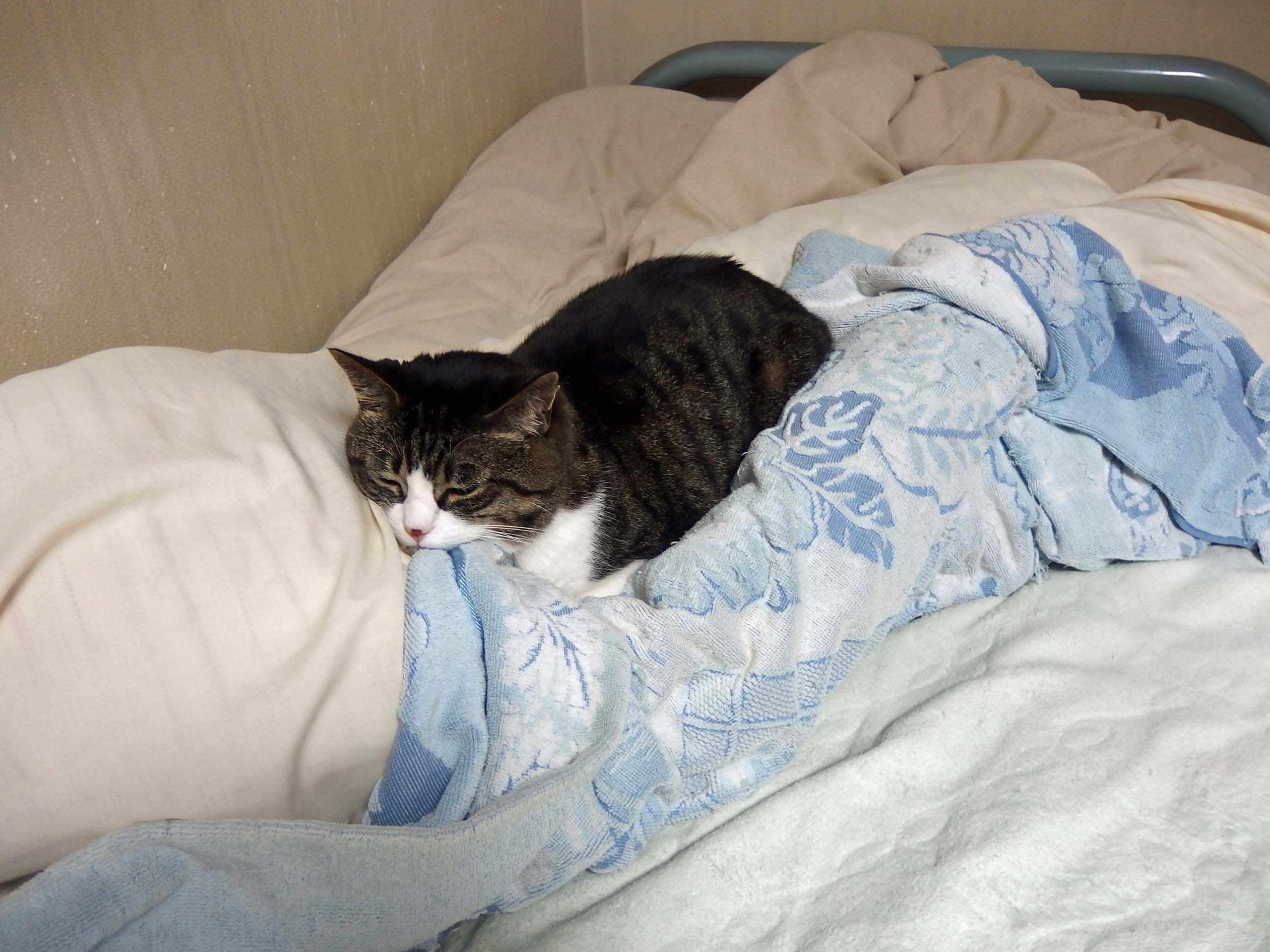 【猫】いいところで・・・_f0141609_21153029.jpg