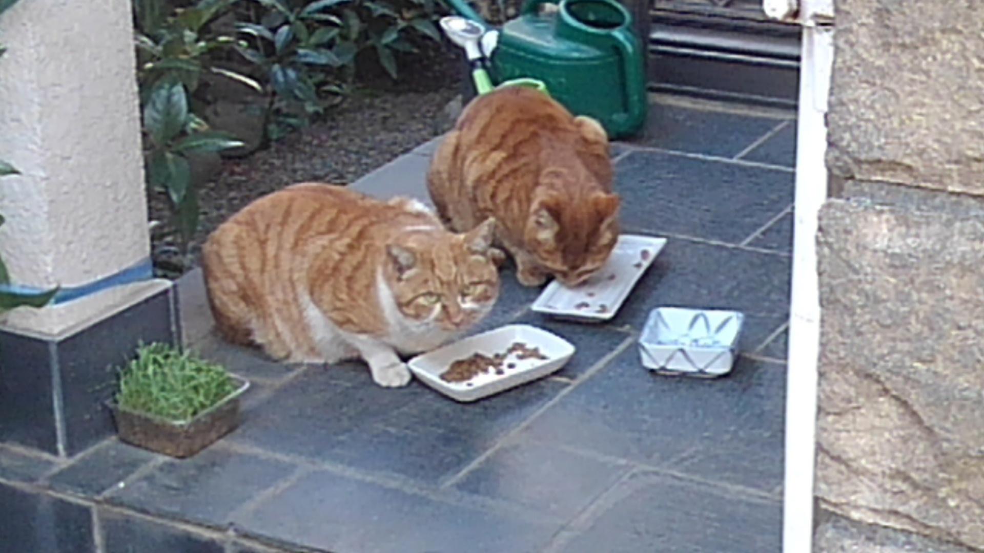 【猫】ノラたち_f0141609_21255615.jpg