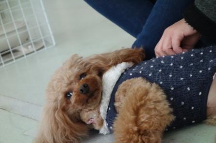 愛犬カレンダー♪_f0170713_09144790.jpg