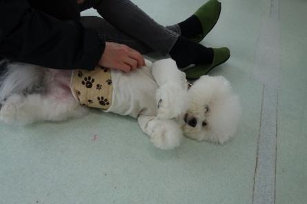 愛犬カレンダー♪_f0170713_09150668.jpg