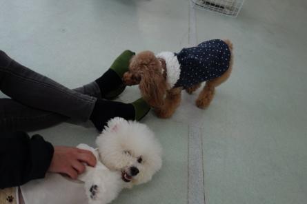 愛犬カレンダー♪_f0170713_09152796.jpg