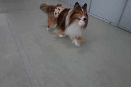 愛犬カレンダー♪_f0170713_09155999.jpg