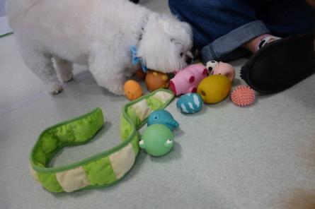 愛犬カレンダー♪_f0170713_09165065.jpg