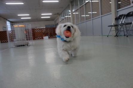愛犬カレンダー♪_f0170713_09170590.jpg