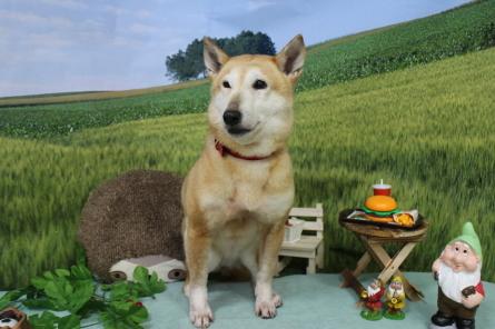 愛犬カレンダー♪_f0170713_09241386.jpg