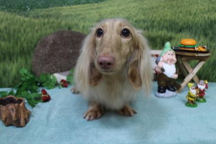 愛犬カレンダー♪_f0170713_09250710.jpg