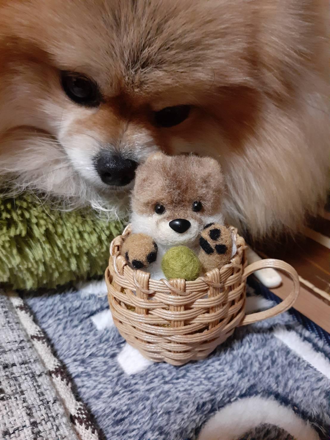 羊毛フェルトポメちゃん♪_f0170713_17311203.jpg
