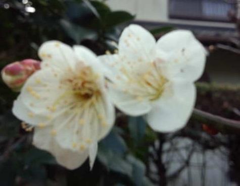 春はすぐそこ  大野英子_f0371014_07280929.jpg