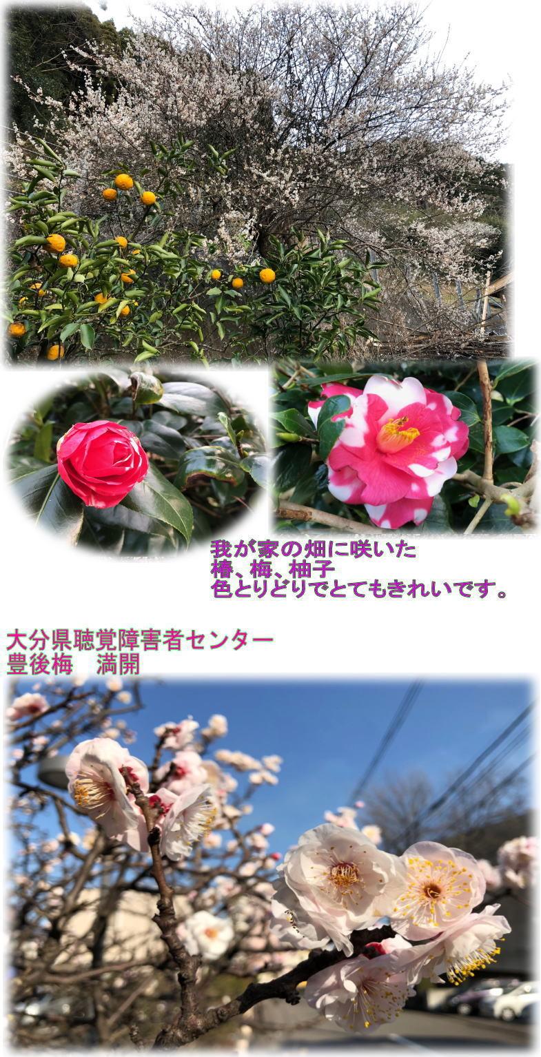 春よ!こい!_d0070316_19553288.jpg