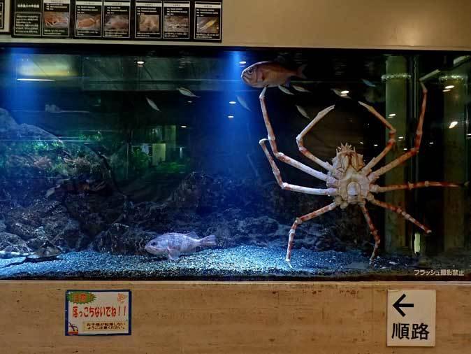 板橋区立熱帯環境植物館~東南アジアの深海【前編】_b0355317_22300552.jpg