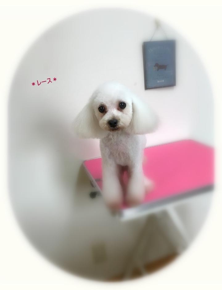 リボンちゃん4姉妹_a0315823_20084345.jpg