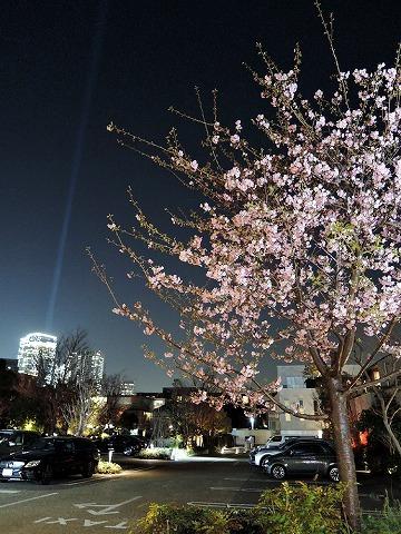 夜桜_c0062832_13392439.jpg