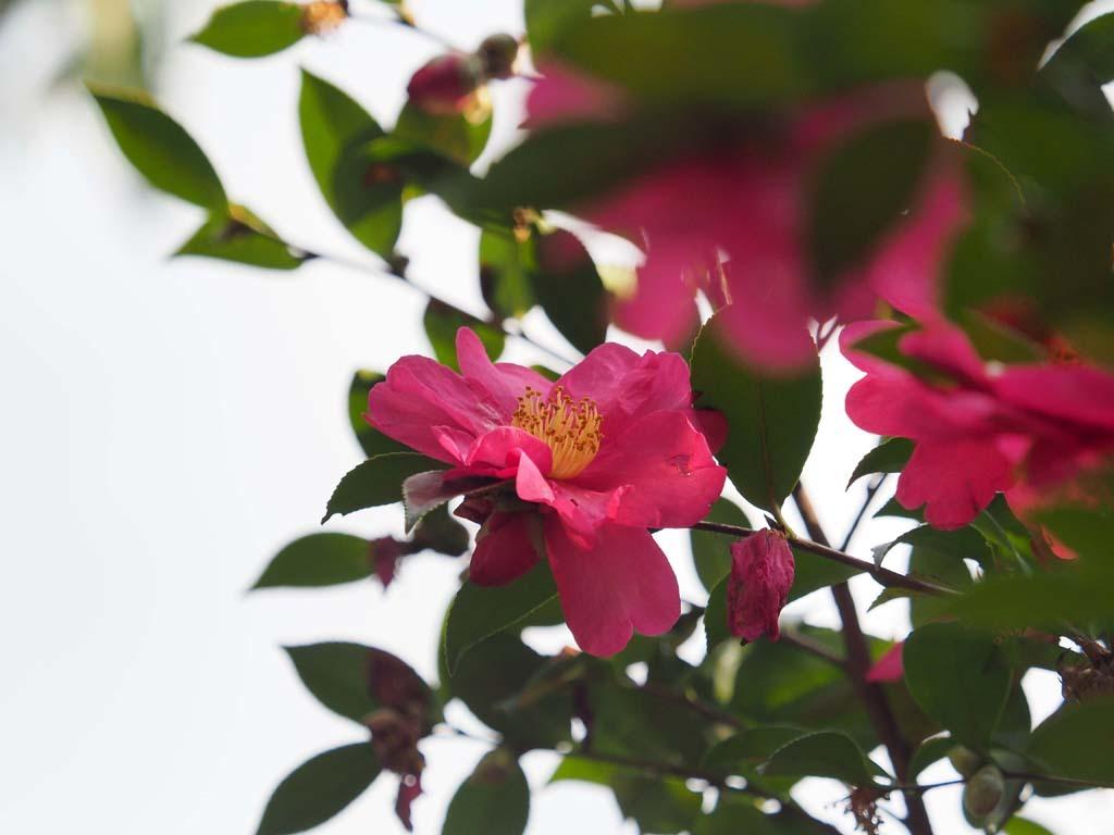 長居植物園@2020-01-30_d0250840_12222230.jpg