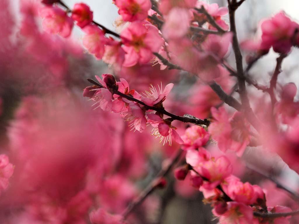 長居植物園@2020-01-30_d0250840_12251250.jpg