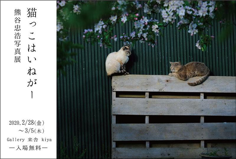2月28日(金)・29日(土)・3月1日 都内3か所で猫写真展三昧(+横浜でもう1つ!)_c0194541_18140503.jpg