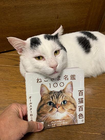 ねこさま名鑑100_a0028451_15053933.jpg