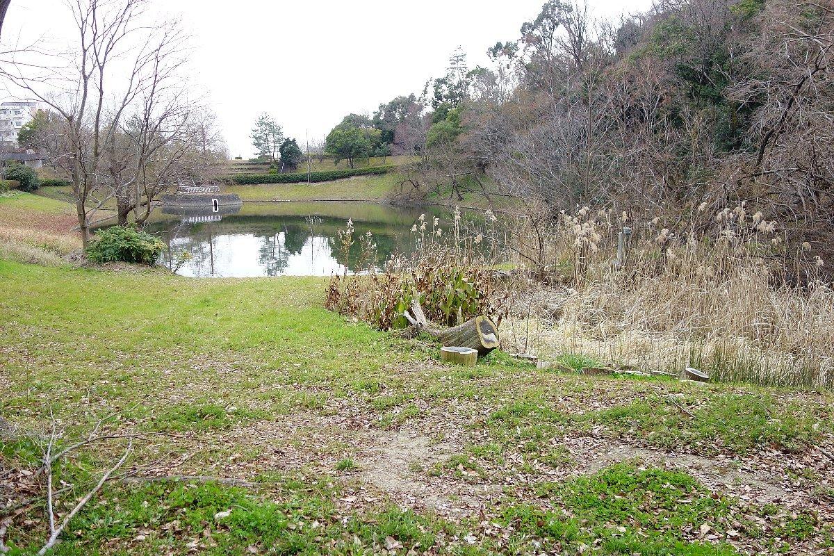 高槻市の上の池公園_c0112559_09065208.jpg
