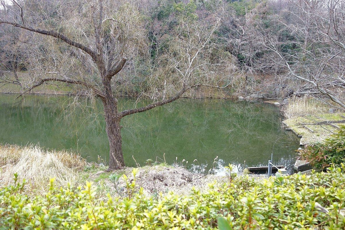 高槻市の上の池公園_c0112559_09080718.jpg