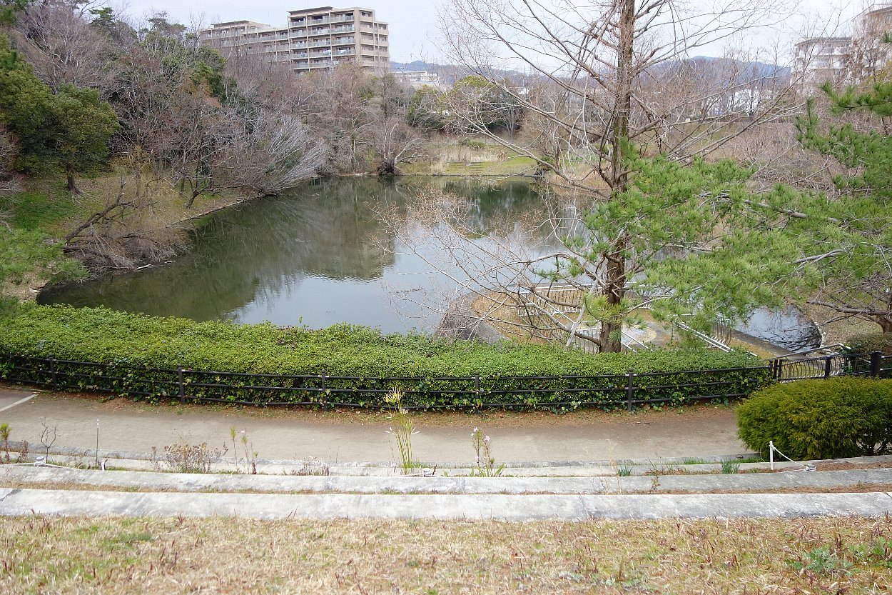 高槻市の上の池公園_c0112559_09092611.jpg