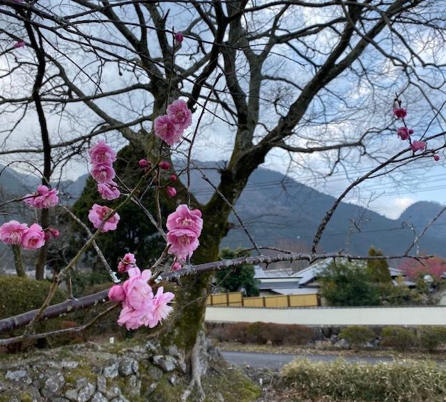 photo album  由布院の お宿 お食事&風景_a0165160_16582300.jpg