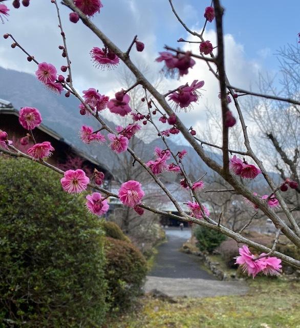 photo album  由布院の お宿 お食事&風景_a0165160_17292545.jpg