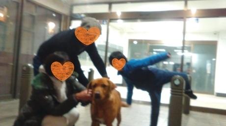 インスリノーマ犬の体調変化のチェックポイント_c0372561_18393404.jpg