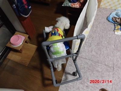 獅子丸の車椅子稼働中_b0231886_21311176.jpg