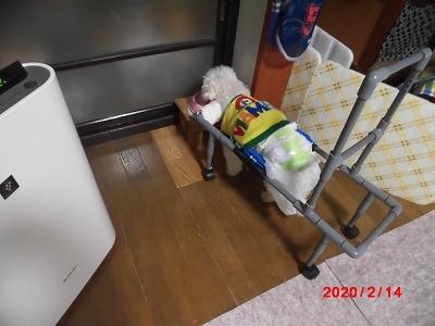 獅子丸の車椅子稼働中_b0231886_21311797.jpg