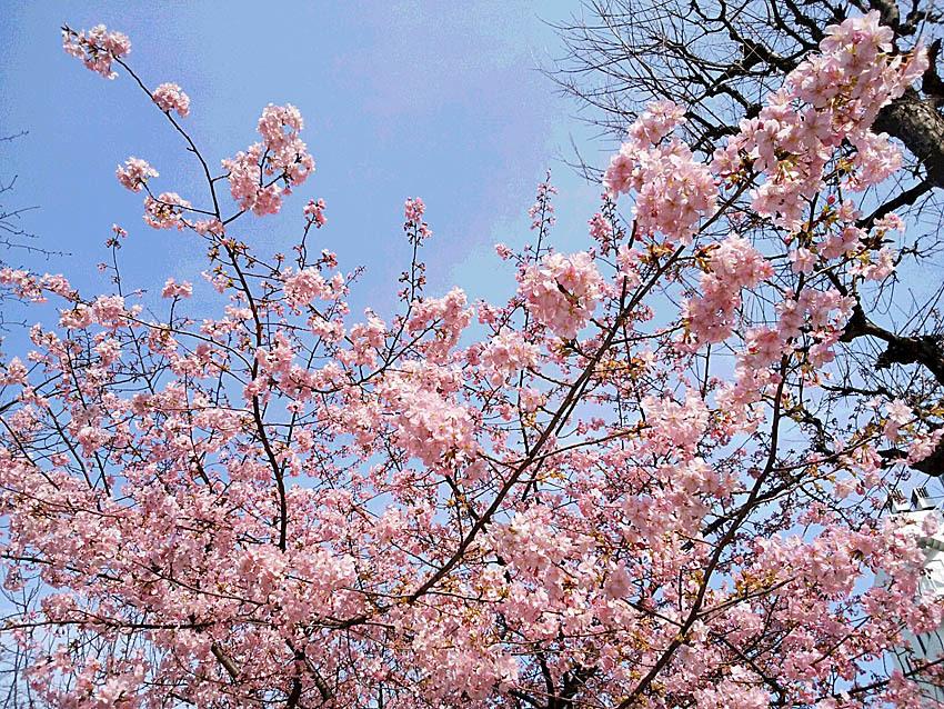 『樹木博士入門』ができた!_d0163696_13552030.jpg