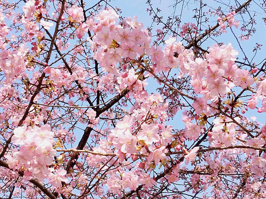 『樹木博士入門』ができた!_d0163696_13552767.jpg