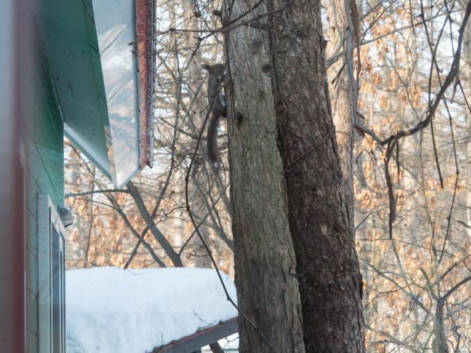 厳寒期の2月なのに・・記録的な暖かさで雪解けが進みます。_f0276498_20012155.jpg