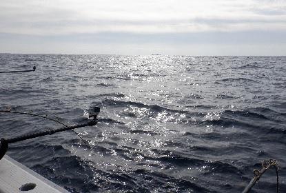 太平洋を船は走る_e0077899_7525858.jpg