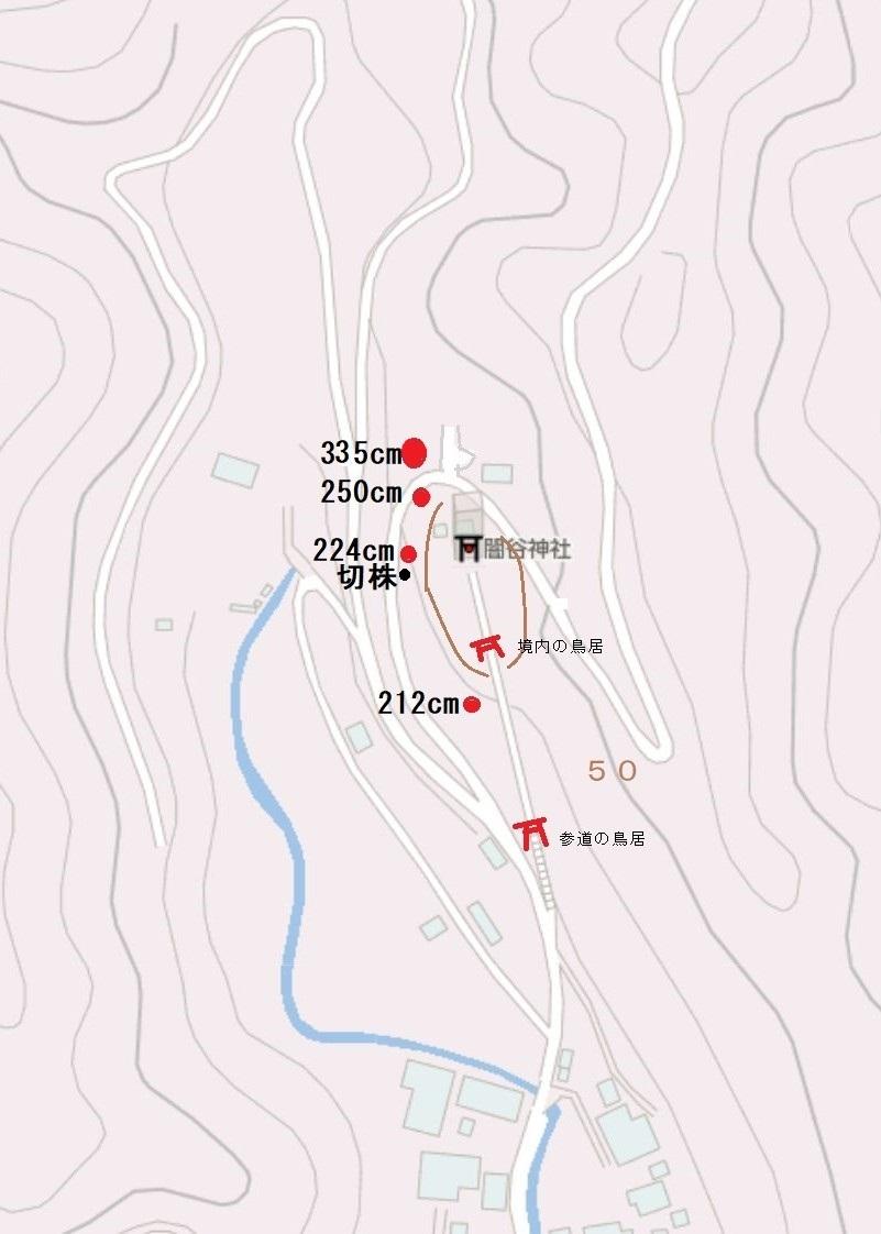 ハナガガシ 高知県最大級の巨樹だった_d0272107_22511334.jpg