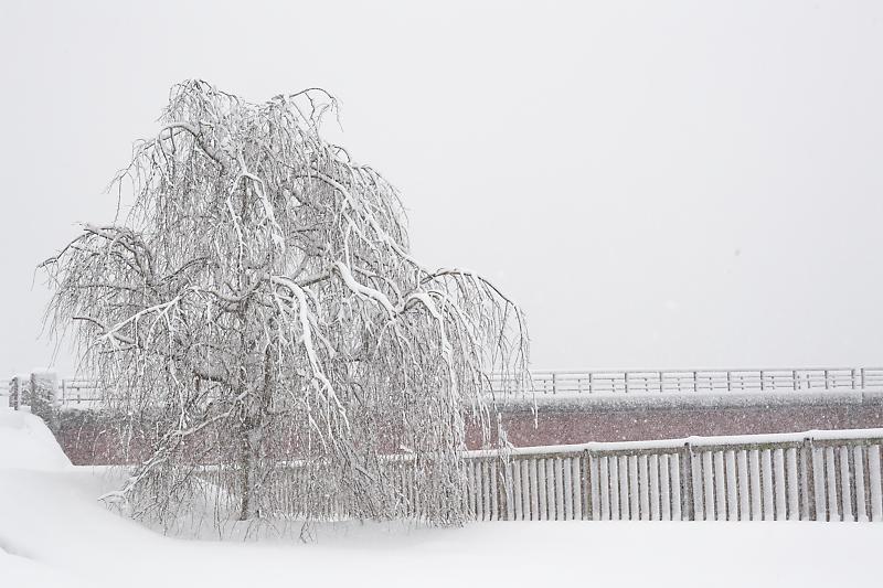 寒波到来!待望の雪景色@美山茅葺きの里 其の二_f0032011_16191024.jpg
